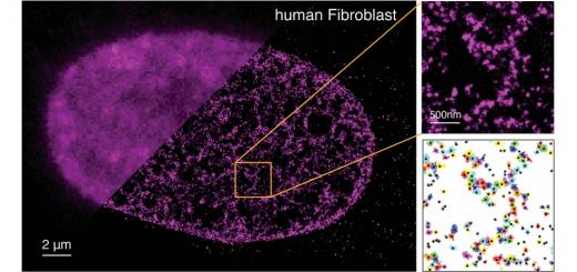 Cell. 2015 Mar 12;160(6):1145-58. doi: 10.1016/j.cell.2015.01.054