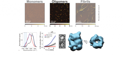 Structural characterization of toxic oligomers that are kinetically trapped during α-synuclein fibril formation. Chen, et al. Proc Natl Acad Sci U S A. 2015 Apr 21;112(16):E1994-2003. doi: 10.1073/pnas.1421204112.