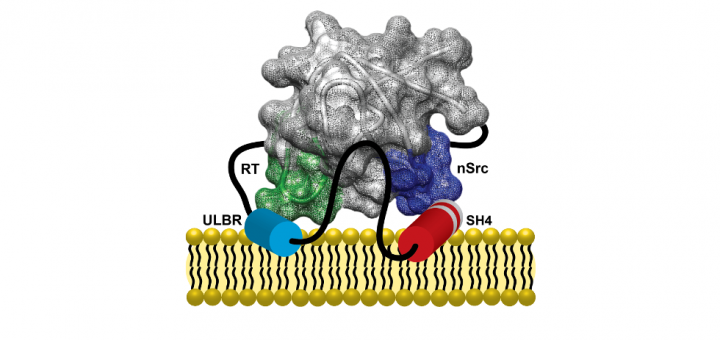 STRUCTURING DISORDER: The case of the Unique domain of the oncoprotein c-Src