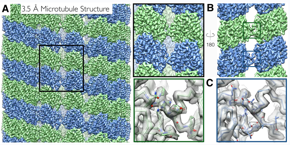 High-resolution Cryo-EM Structure of the Microtubule. Eva Nogales 2015.
