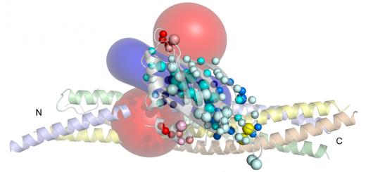 Dynamic binding mode of a Synaptotagmin-1-SNARE complex in solution. Nat Struct Mol Biol. 2015 Jul;22(7):555-64. doi: 10.1038/nsmb.3035.