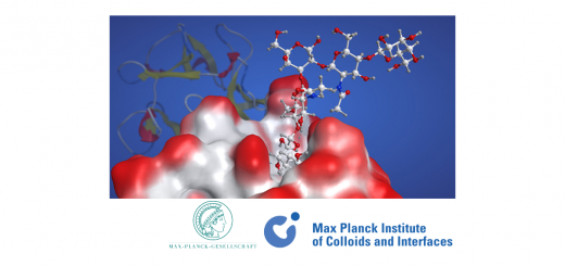 Structural Glycobiology. Max Planck Institute of Colloids and Interfaces.