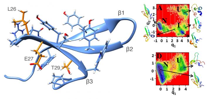 Preventing fibril formation of a protein by selective mutation. Proc Natl Acad Sci U S A. 2015 Nov 3;112(44):13549-54.