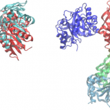 PACSAB: Coarse-Grained Force Field for the Study of Protein-Protein Interactions and Conformational Sampling in Multiprotein Systems. J Chem Theory Comput. 2015 Dec 8;11(12):5929-38. doi: 10.1021/acs.jctc.5b00660.