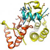The Redox State Regulates the Conformation of Rv2466c to Activate the Antitubercular Prodrug TP053. J Biol Chem. 2015 Dec 25;290(52):31077-89. doi: 10.1074/jbc.M115.677039.