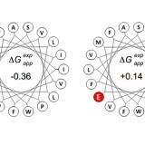 Biological insertion of computationally designed short transmembrane segments.Sci Rep. 2016 Mar 18;6:23397. doi: 10.1038/srep23397.