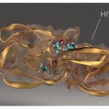 BSC and IrsiCaixa create bioinformatics method to predict the effectiveness of antiretroviral drugs.
