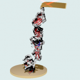 The Protein Nanomechanics Lab at Institute Cajal - CSIC