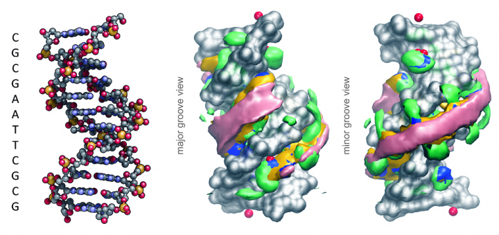 Long-timescale dynamics of the Drew-Dickerson dodecamer. Nucleic Acids Res. 2016 May 19;44(9):4052-66.