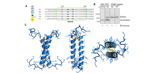 Structural Basis of p75 Transmembrane Domain Dimerization. J Biol Chem. 2016 Jun 3;291(23):12346-57. doi: 10.1074/jbc.M116.723585.