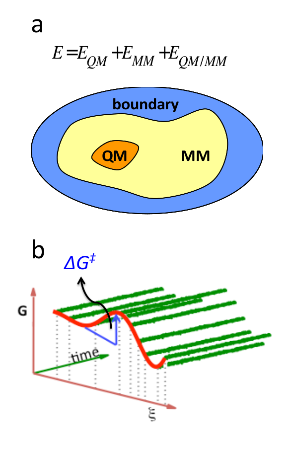 QM/MM methods for computational simulations of enzyme catalysis