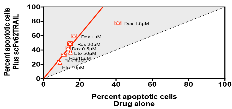 Potentiation of apoptosis induction by cytotoxic drugs through the Kv10.1-targeted scFv62TRAIL construct. All drugs were several fold more potent in the presence of the construct.