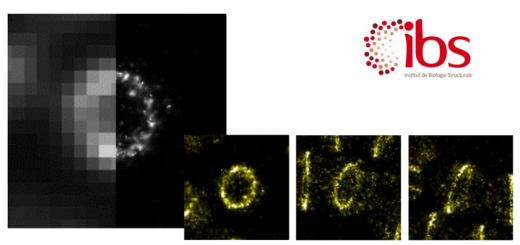 Super-resolution imaging of bacterial division 3-year post-doctoral position IBS, Grenoble, France