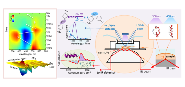 FPI-Predoc: Optical control of photoswitchable membrane peptides, Biomembranes at ICMol