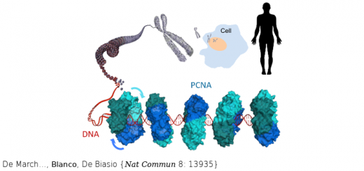 Structural basis of human PCNA sliding on DNA. Nat Commun. 2017 Jan 10;8:13935. doi: 10.1038/ncomms13935.