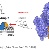 Muropeptide Binding and the X-ray Structure of the Effector Domain of the Transcriptional Regulator AmpR of Pseudomonas aeruginosa. J Am Chem Soc. 2017 Feb 1;139(4):1448-1451. doi: 10.1021/jacs.6b12819.