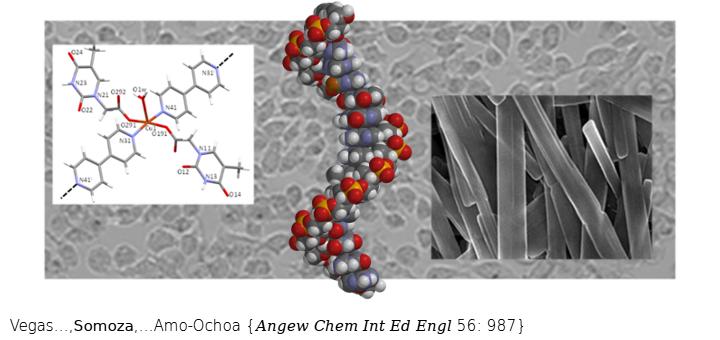 Copper(II)-Thymine Coordination Polymer Nanoribbons as Potential Oligonucleotide Nanocarriers. Angew Chem Int Ed Engl. 2017 Jan 19;56(4):987-991. doi: 10.1002/anie.201609031.