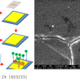 DNA-Origami-Driven Lithography for Patterning on Gold Surfaces with Sub-10 nm Resolution. Adv Mater. 2017 Mar;29(11). doi: 10.1002/adma.201603233.
