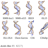 How accurate are accurate force-fields for B-DNA? Nucleic Acids Res. 2017 Apr 20;45(7):4217-4230. doi: 10.1093/nar/gkw1355.