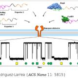 Label-Free, Multiplexed, Single-Molecule Analysis of Protein-DNA Complexes with Nanopores. ACS Nano. 2017 Jun 27;11(6):5815-5825. doi: 10.1021/acsnano.7b01434.