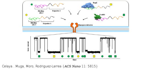 Label-Free, Multiplexed, Single-Molecule Analysis of Protein-DNA Complexes with Nanopores. ACS Nano. 2017 Jun 27;11(6):5815-5825. doi: 10.1021/acsnano.7b01434.