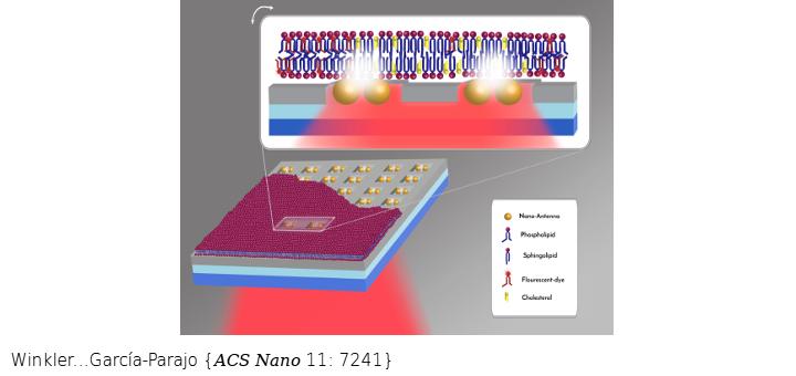 Transient Nanoscopic Phase Separation in Biological Lipid Membranes Resolved by Planar Plasmonic Antennas. ACS Nano. 2017 Jul 25;11(7):7241-7250. doi: 10.1021/acsnano.7b03177.