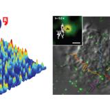 Postdoctoral research position in quantitative fluorescence nano-imaging & single molecule dynamics
