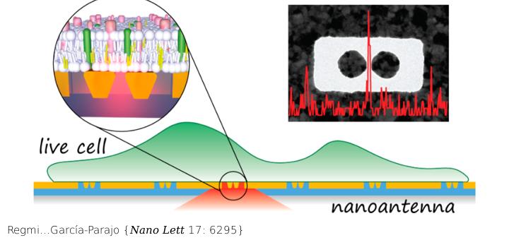 Planar Optical Nanoantennas Resolve Cholesterol-Dependent Nanoscale Heterogeneities in the Plasma Membrane of Living Cells. Nano Lett 17: 6295. Doi: 10.1021/acs.nanolett.7b02973.