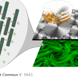 Taming active turbulence with patterned soft interfaces. Nat Commun. 2017 Sep 15;8(1):564. doi: 10.1038/s41467-017-00617-1.