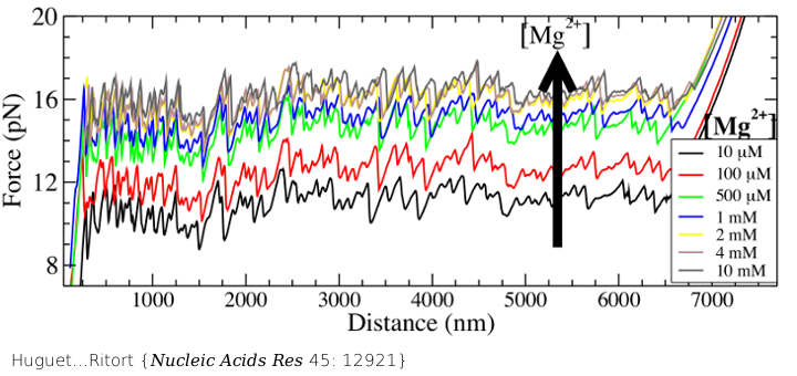 In DNA unzipping experiments the two strands of a DNA molecule are separated by pulling the two phosphate chains from opposite ends using an optical trap. This figure shows the measured force as a function of the trap position (the so-called force-distance curve) in aqueous buffers at different divalent salt (magnesium chloride) concentrations. We find that the higher the salt concentration the higher the average unzipping force demonstrating that salt screens the electrostatic repulsion between the two phosphate chains. To such measurements one can fit theoretically predicted curves from statistical models that combine the nearest neighbor model for DNA and the elastic response of single stranded DNA under applied force. Best fits to the measured curves give accurate estimates of the free energies of the nearest-neighbor energies motifs and initiation factors (the energy contribution to duplex formation by DNA free ends). The present study provides a comprehensive set of energies in a wide range of divalent salt, demonstrating for the first time that cation activity of the different NN motifs is strongly heterogeneous.